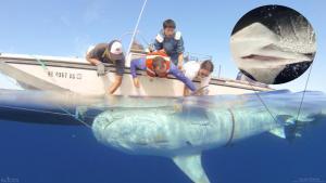 sharkbiology